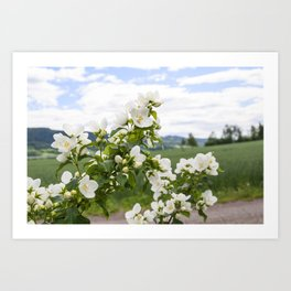 Flowers whit a view Art Print