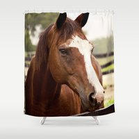 coco Shower Curtains featuring Coco by Images by Nicole Simmons