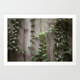 Vines on Wooden Fence Art Print
