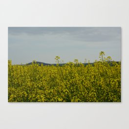 sun in the nature Canvas Print