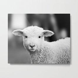 Lamb in Black and White Metal Print