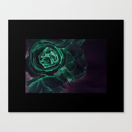 Peonies in Bloom Canvas Print