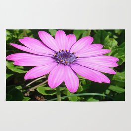 Single Pink African Daisy Against Green Foliage Rug