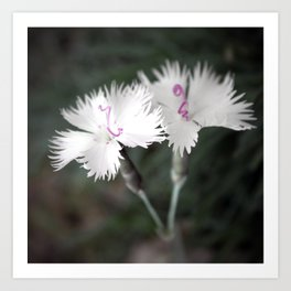 Stargazing, White Flowers Art Print