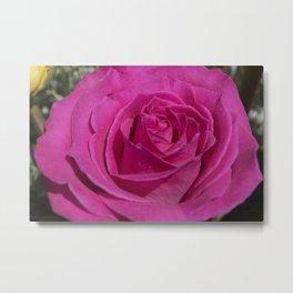 Valentine's Day Roses 29 Metal Print