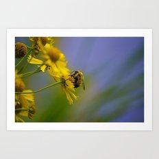 St. Croix Bee Art Print