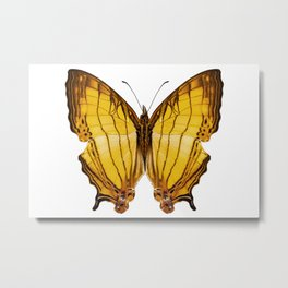 "Butterfly species Cyrestis lutea ""Orange Straight-line"" Metal Print"