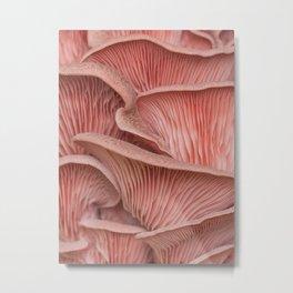 Pink oyster mushroom pleurotus Metal Print