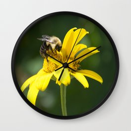 Bumble Bee on Oxeye Sunflower Wall Clock