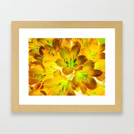 closeup yellow flower with green pollen background Framed Art Print