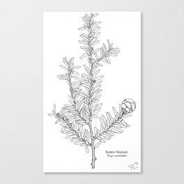 Eastern Hemlock (Tsuga canadensis) Plate I  Canvas Print