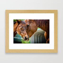 Momma Horse Embraces Her Colt Framed Art Print