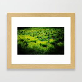 All Vines Lead To.. Framed Art Print