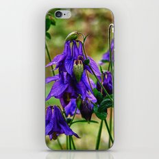 Purple Petals in the Rain iPhone & iPod Skin