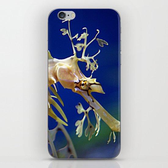 Leafy Sea Dragon iPhone & iPod Skin