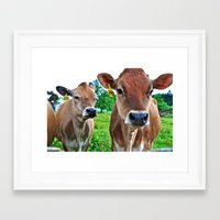cows Framed Art Prints featuring Cows by Chris Klemens