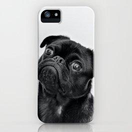 Cute pug face iPhone Case