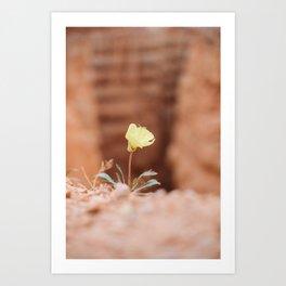 Bryce Canyon Yellow Flower Art Print