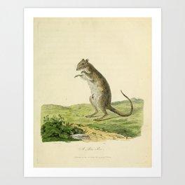 """A Poto Roo"" by Sarah Stone, 1790 Art Print"