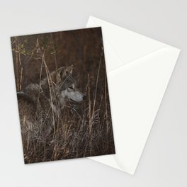 Cana in Fall Foliage Stationery Cards