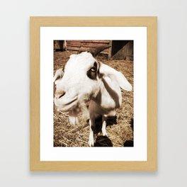 Close Up Goat Framed Art Print