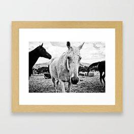 Desert Horse, I Framed Art Print