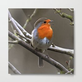 European Robin Red and Grey Painting Metal Print