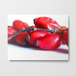Rose Hip Berries Metal Print