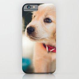 Cute Labrador Puppy Red Collar iPhone Case