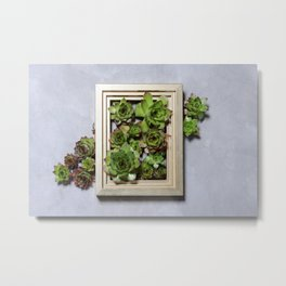 Succulent plants decor Metal Print