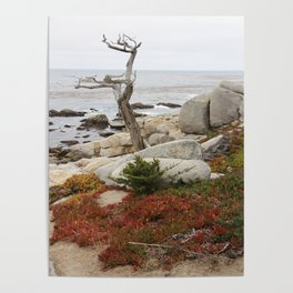 Dead Cypress At Pebble Beach Poster