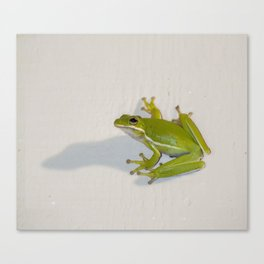 tree frog and his shadow Canvas Print