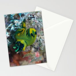 Squishy nembrotha nudi hanging on for dear life Stationery Cards