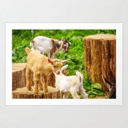 Baby Goats Playing Art Print