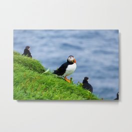 The Puffins of Mykines in the Faroe Islands V Metal Print