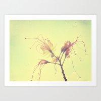 The Desert Bird of Paradise  Art Print