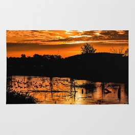 Silhouetted Canadian Geese taking a break in a pond in Ann Arbor, Michigan Rug