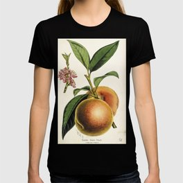 A peach plant - vintage illustration T-shirt