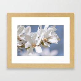 White Magnolia Framed Art Print