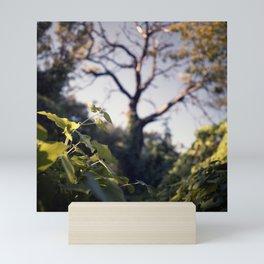 Old Tree, Color Film Photo Mini Art Print