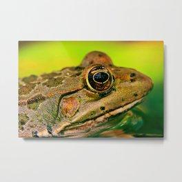 Frog's Eye Metal Print