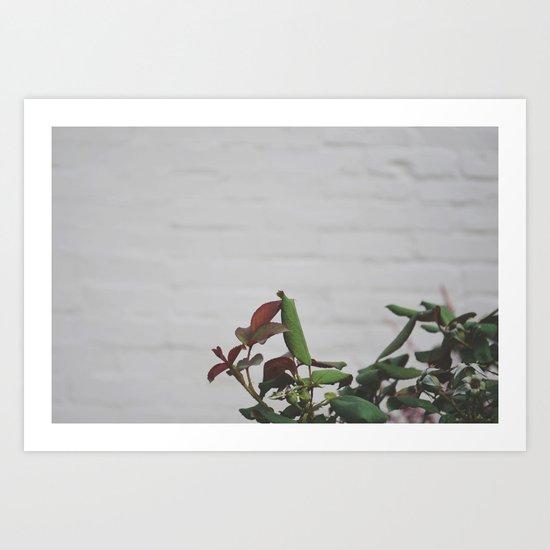 Rose Hips - No. 2 Art Print