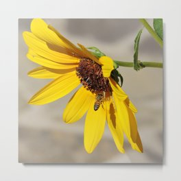 Desert Sunflower Pollen Shop Metal Print