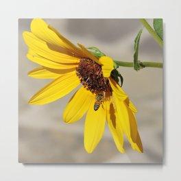 Desert Sunflower Pollen Shop Metal Print