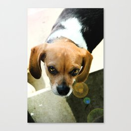 For The Love Of Beagle Canvas Print