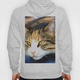 Contented Cat Hoody
