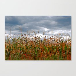 Corn field Canvas Print