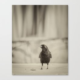 Betsy's Crow In The Snow Canvas Print