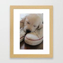 Puppy Sleeping on Converse Framed Art Print