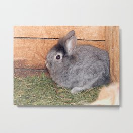 Rabbits in the aviary Metal Print